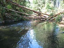 Eagle Creek, Longview, Fiber Property Schmitz July 2009
