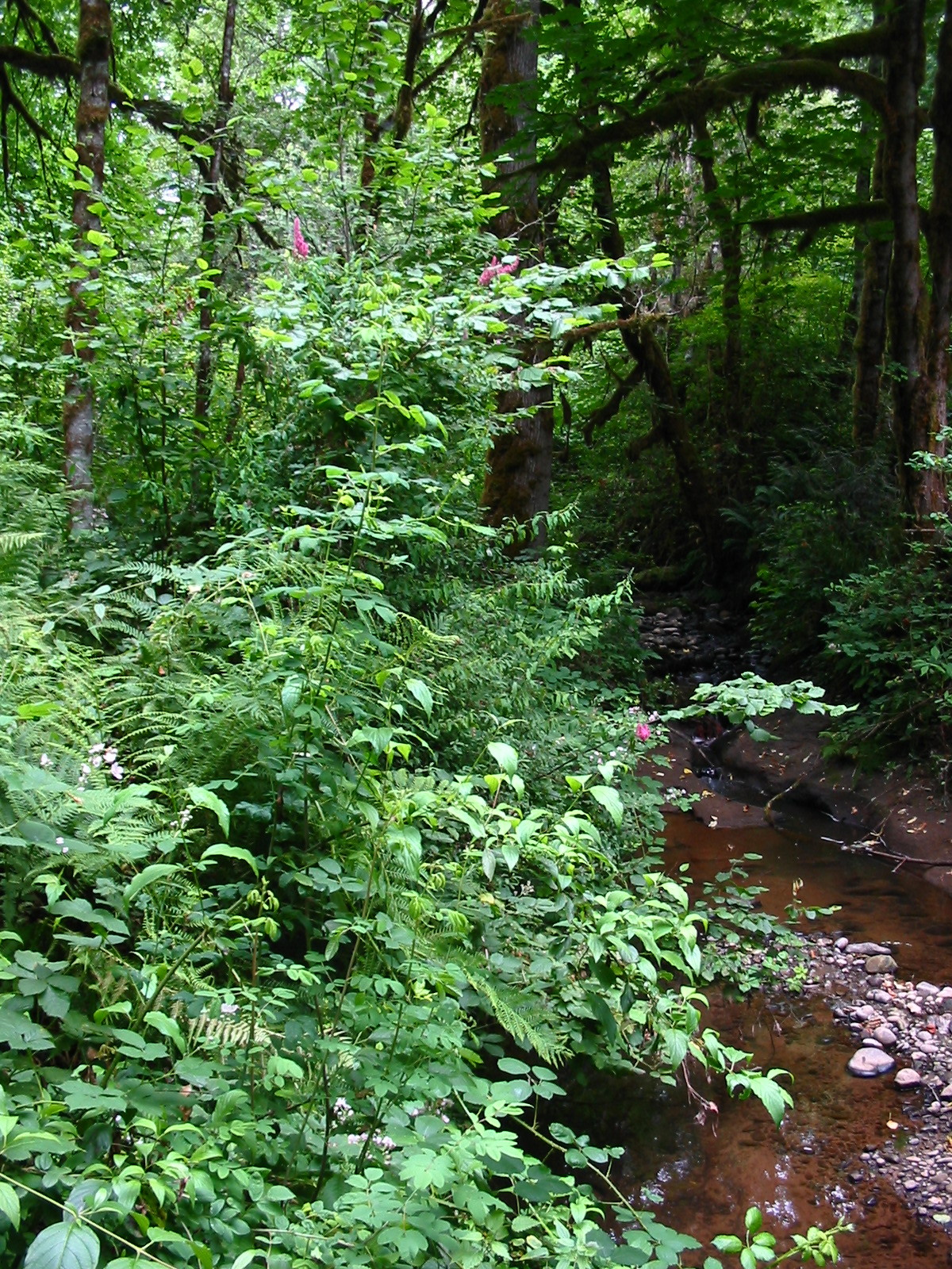 Noyer Creek, Oregon